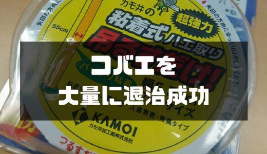 【コバエを激キャッチ】安いのにめちゃめちゃコバエ退治に効果あり!!